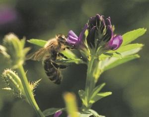 bee - smaller