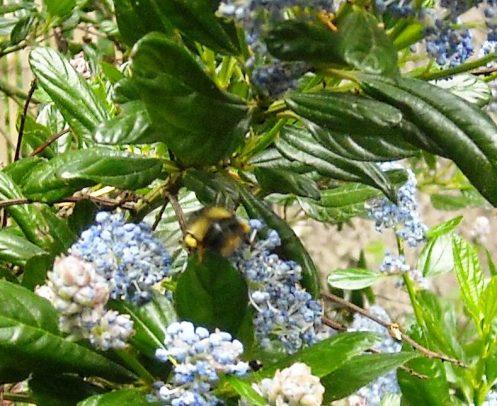 06-14 bee 2