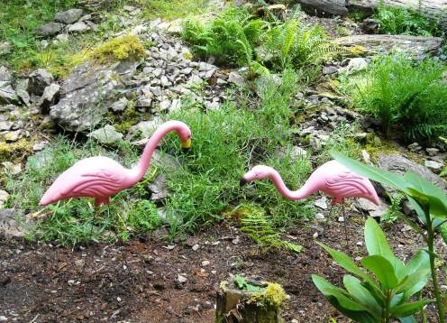 flamingo reunion