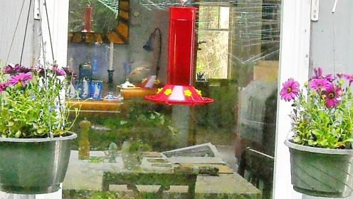05-13 hummingbird