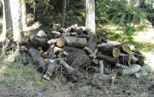 09-02 woodpile 2