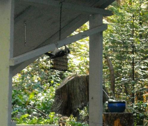 09-05 bird feeder
