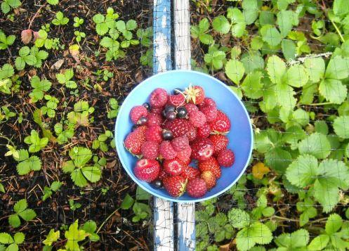 06-30 berries