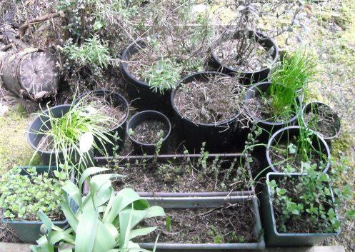 04-24 herbs