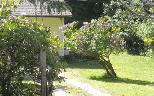 05-08 lilac 2