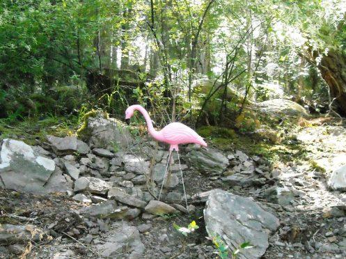 06-13 flamingo 2